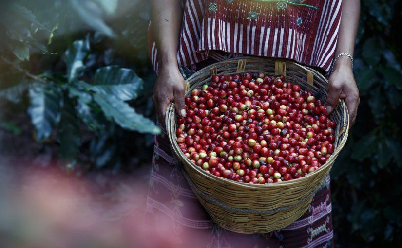 arabica kawa sklep